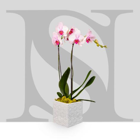 Entretien de vos orchidées